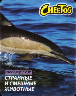 PaxToy.com - 01 Дельфин Обыкновенный из Cheetos: Странные и Смешные Животные