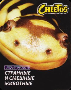 PaxToy.com - 02 Амбистома Мексиканская из Cheetos: Странные и Смешные Животные