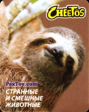 PaxToy.com - 03 Ленивец Бурогорлый из Cheetos: Странные и Смешные Животные