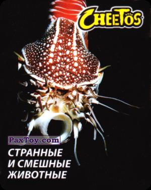 PaxToy.com - 05 Наутилус Помпилус из Cheetos: Странные и Смешные Животные