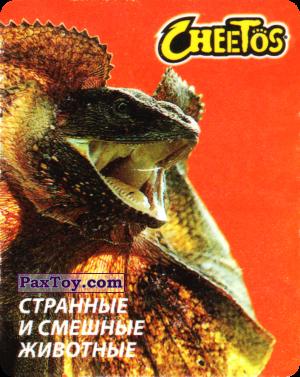 PaxToy.com - 07 Ящерица Плащеносная из Cheetos: Странные и Смешные Животные