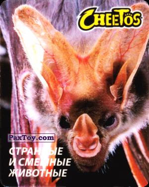 PaxToy.com - 08 Летучая Мышь из Cheetos: Странные и Смешные Животные
