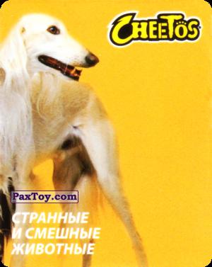 PaxToy.com - 11 Борзая Афганская из Cheetos: Странные и Смешные Животные