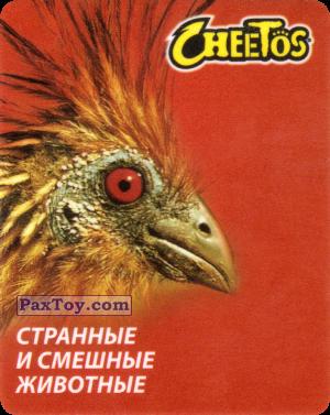 PaxToy.com - 12 Гоацин из Cheetos: Странные и Смешные Животные