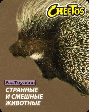 PaxToy.com - 13 Дикобраз Африканский из Cheetos: Странные и Смешные Животные