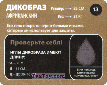 PaxToy.com - 13 Дикобраз Африканский (Сторна-back) из