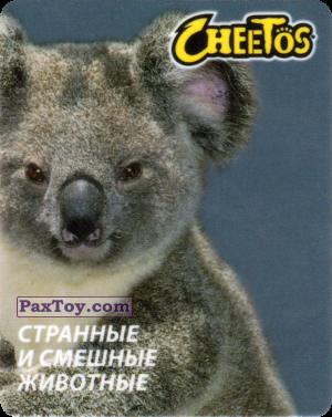 PaxToy.com - 14 Коала из Cheetos: Странные и Смешные Животные