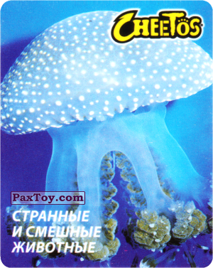 PaxToy.com - 15 Медуза Тропическая из Cheetos: Странные и Смешные Животные