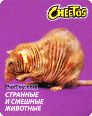 PaxToy.com  Карточка / Card 16 Голый Землекоп из Cheetos: Странные и Смешные Животные