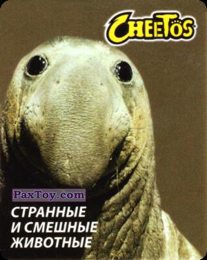 PaxToy.com - 17 Слон Морской из Cheetos: Странные и Смешные Животные