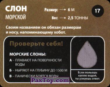 PaxToy.com - 17 Слон Морской (Сторна-back) из