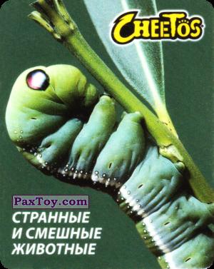 PaxToy.com - 18 Бражник Олеандровый из Cheetos: Странные и Смешные Животные