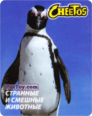 PaxToy.com - 19 Пингвин королевский из Cheetos: Странные и Смешные Животные