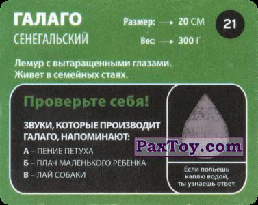 PaxToy.com - 21 Галаго сенегальский (Сторна-back) из