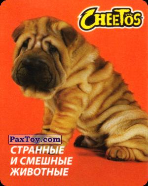 PaxToy.com - 22 Шарпей из Cheetos: Странные и Смешные Животные