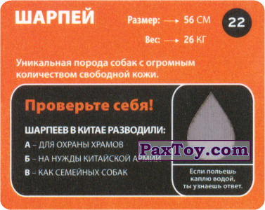 PaxToy.com - 22 Шарпей (Сторна-back) из