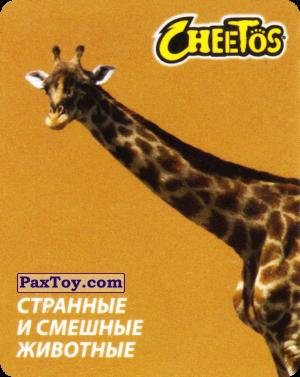 PaxToy.com - 23 Жираф из Cheetos: Странные и Смешные Животные