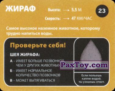 PaxToy.com - 23 Жираф (Сторна-back) из