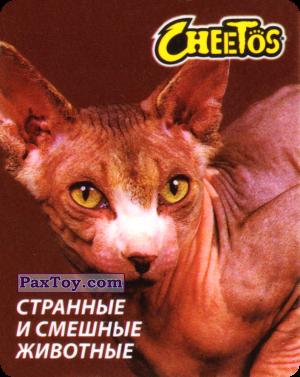 PaxToy.com - 24 Сфинкс из Cheetos: Странные и Смешные Животные