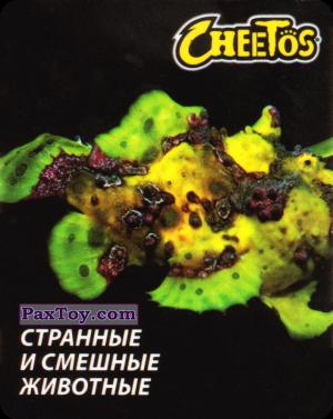PaxToy.com - 25 Рыба удильщик из Cheetos: Странные и Смешные Животные