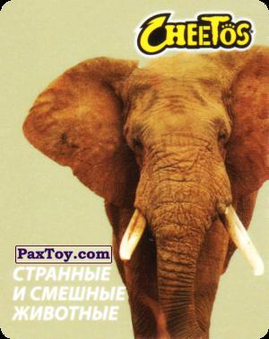 PaxToy.com  Карточка / Card 26 Слон Африканский из Cheetos: Странные и Смешные Животные