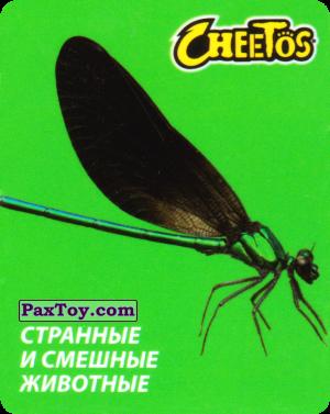 PaxToy.com - 28 Стрекоза из Cheetos: Странные и Смешные Животные