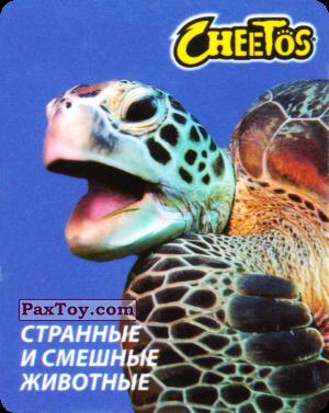 PaxToy.com - 30 Черепаха морская из Cheetos: Странные и Смешные Животные