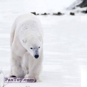 PaxToy.com - 13 МАША И СЕВЕРНАЯ ЗЕМЛЯ (Сторна-back) из Пеликан: Маша и Медведь - Большое путешествие по стране!