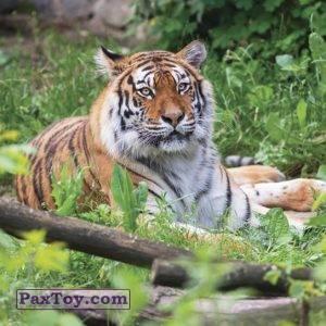 PaxToy.com - 18 МАША И ХАБАРОВСК (Сторна-back) из Пеликан: Маша и Медведь - Большое путешествие по стране!