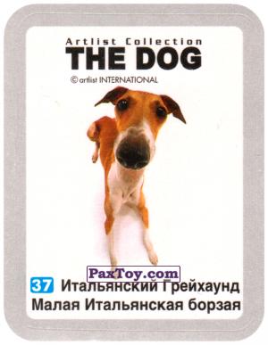 PaxToy.com - 37 Итальянский Грейхаунд Малая Итальянская борзая из Cheetos: THE DOG: Artlist Collection