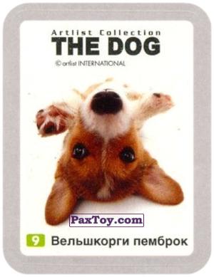 PaxToy.com - 9 Вельшкорги пемброк из Cheetos: THE DOG: Artlist Collection