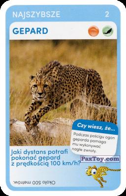 PaxToy.com - 02 Gepard из Biedronka: Super zwierzaki
