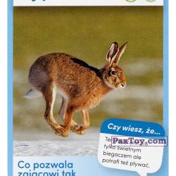 PaxToy 03 Zajac Szarak