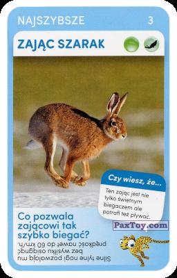 PaxToy.com - 03 Zajac Szarak из Biedronka: Super zwierzaki