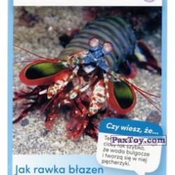 PaxToy 06 Rawka Blazen