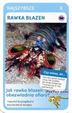 PaxToy.com - 06 Rawka Blazen из Biedronka: Super zwierzaki