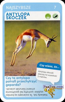 PaxToy.com - 07 Antylopa skoczek из Biedronka: Super zwierzaki