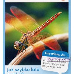 PaxToy 09 Wazka