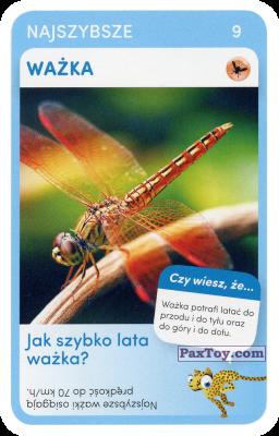 PaxToy.com - 09 Wazka из Biedronka: Super zwierzaki
