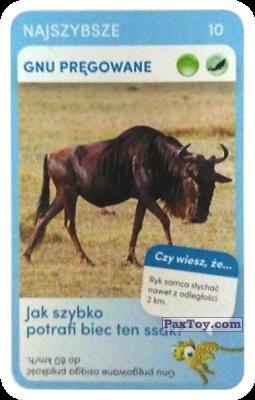 PaxToy.com - 10 Gnu Pregowane из Biedronka: Super zwierzaki