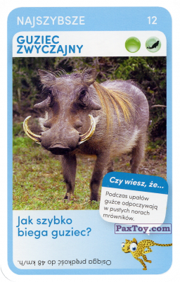PaxToy.com - 12 Guziec Zwyczajny из Biedronka: Super zwierzaki
