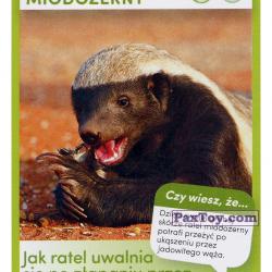 PaxToy 14 Ratel Miodozerny