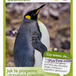PaxToy 16 Pingwin Cesarki