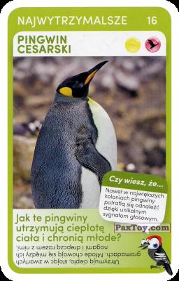 PaxToy.com - 16 Pingwin Cesarki из Biedronka: Super zwierzaki