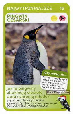 PaxToy.com  Карточка / Card 16 Pingwin Cesarki из Biedronka: Super zwierzaki