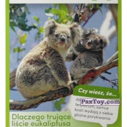 PaxToy 19 Koala
