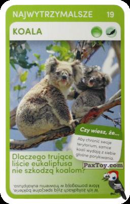 PaxToy.com - Карточка 19 Koala из Biedronka: Super zwierzaki