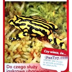 PaxToy 27 Zaba Pseudophryne Corroboree