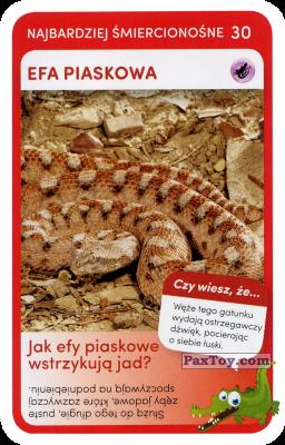 PaxToy.com - 30 Efa Piaskowa из Biedronka: Super zwierzaki