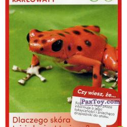 PaxToy 31 Drzewolaz Karlowaty